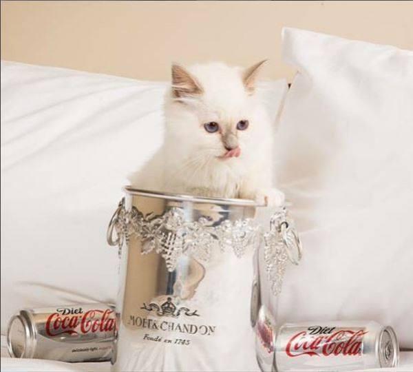 Yeux de Saphir Roxys Quick Silver  Lilac point coke ad